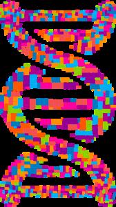 dna, deoxyribonucleic acid, typography-2753787.jpg