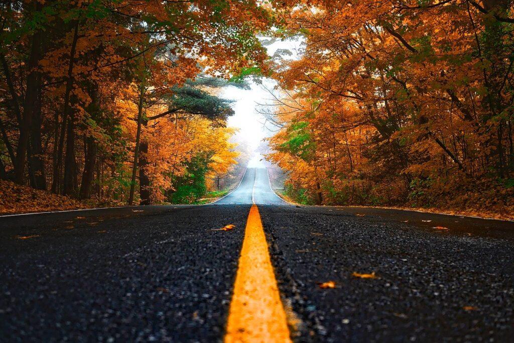 autumn, street, leaves-1758194.jpg